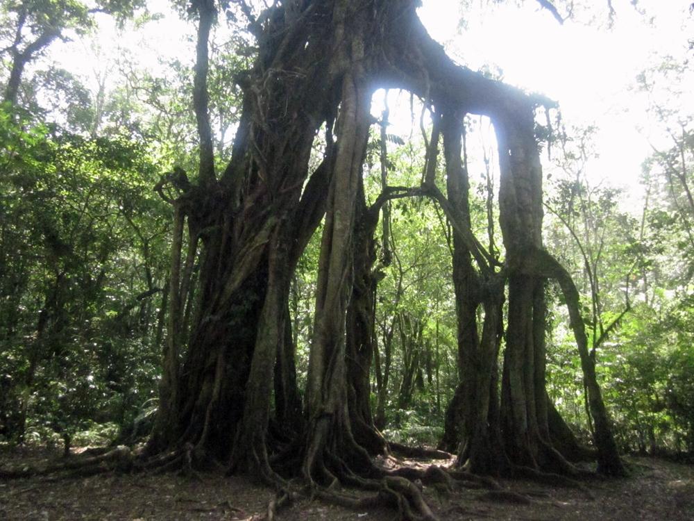 bali植物園