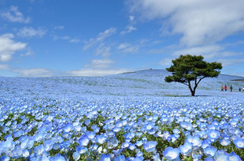 茨城県の観光名所おすすめ人気ランキング10選 穴場から子供が楽しめる場所まで!