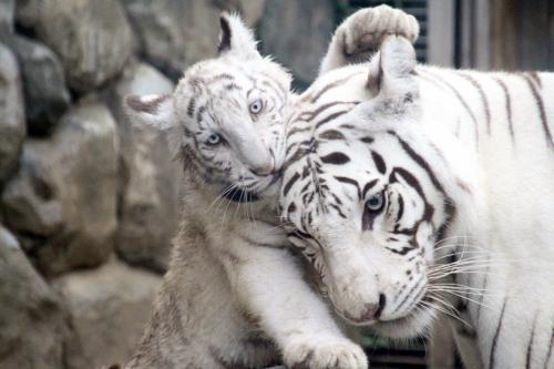 関東おすすめ動物園 人気ランキングBEST10 デートもバッチリ!