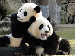 関西おすすめ動物園 人気ランキングBEST10 近畿地方もあるぞ!