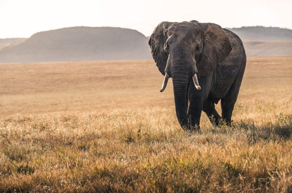 ケニア旅行は実は危険?治安と最低、注意しておきたい11のこと