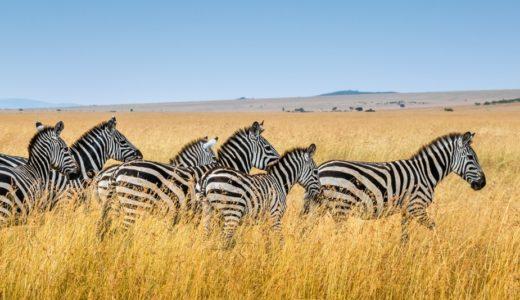 【2020年】ケニアの治安情勢まとめ!旅行者が注意すべき危険ポイント
