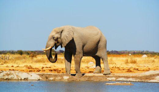 【2020年】ボツワナの治安情勢まとめ!旅行者が注意すべき危険ポイント